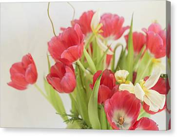 Canvas Print featuring the photograph A Hint Of Spring by Rosemary Aubut