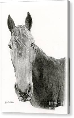 A Horse Of Course Canvas Print by Sarah Batalka