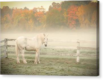 A Horse With No Name Canvas Print by K Hines