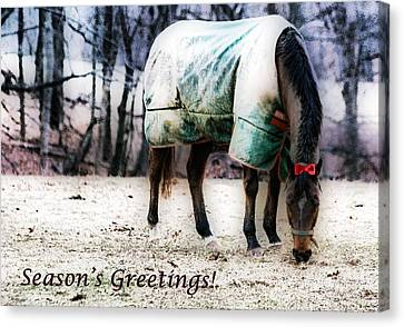 Canvas Print featuring the photograph A Horse's Season's Greeting Card by Polly Peacock