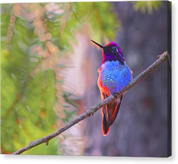 A Hummingbird Resting In The Evening Light. Canvas Print