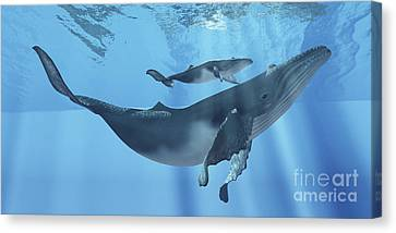 A Humpback Whale Mother And Her Calf Canvas Print by Corey Ford