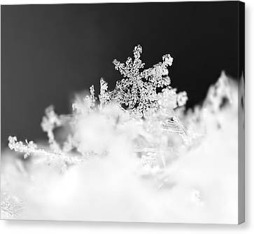 A Jewel Of A Snowflake Canvas Print by Rona Black