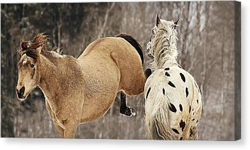 A Kick In The Chops Canvas Print by Carey Dils