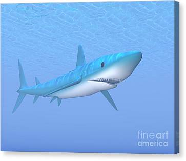 A Large Blue Shark Swimming Quietly Canvas Print