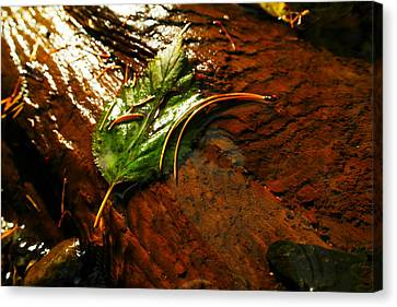 A Leaf Washed Over Canvas Print by Jeff Swan