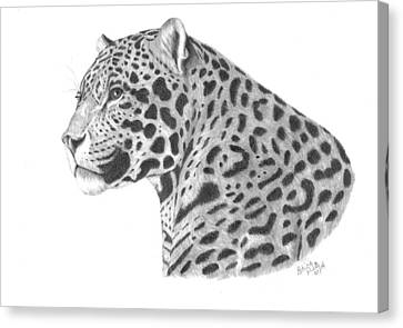 A Leopard's Watchful Eye Canvas Print