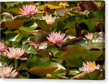 A Lily Carpet Canvas Print by Sabine Edrissi