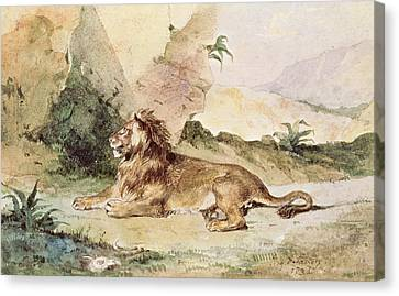 A Lion In The Desert Canvas Print