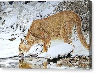 A Lion In Winter Canvas Print by Susan Moyer