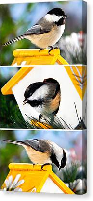 A Little Bird Told Me - Three Chickadees Triptych Canvas Print