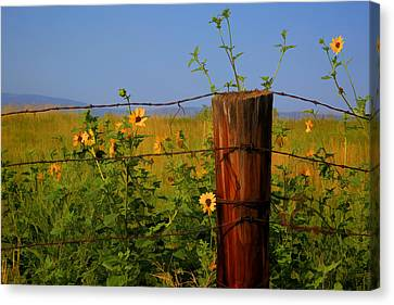 Barbed Wire Fences Canvas Print - A Little Bit Of Yellow by Donna Kennedy