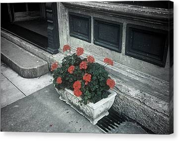 Canvas Print featuring the photograph A Little Color In A Drab World by Rodney Lee Williams