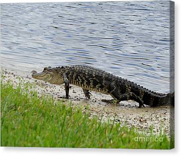 A Little Guy Canvas Print by Zina Stromberg