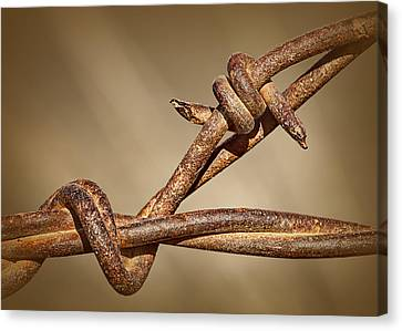 Barbed Wire Fences Canvas Print - A Little Ill-nature by Nikolyn McDonald