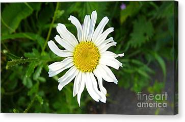 A Little Ray Of Sunshine.  Canvas Print