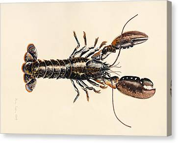 A Lobster From Solva Canvas Print