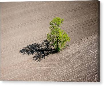 Aerial View Canvas Print - A Lone Tree In A Newly Seeded Corn Field. Richmond Ontario Dairy Farm. by Rob Huntley