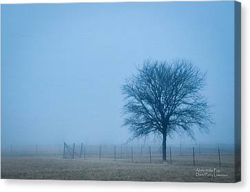 A Lone Tree In The Fog Canvas Print by David Perry Lawrence