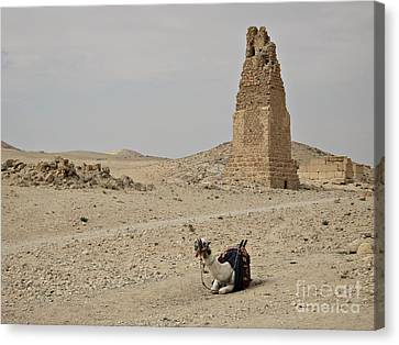 Canvas Print featuring the photograph A Lonely Camel by Cendrine Marrouat