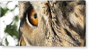 Canvas Print featuring the photograph Bubo Bubo- Eurasian Eagle Owl. Close Up. by Ausra Huntington nee Paulauskaite