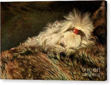 A Long Winter's Nap Canvas Print by Lois Bryan