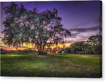 Oaks Canvas Print - A Look Back by Marvin Spates