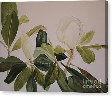 Canvas Print featuring the painting A Magnolia Duet by Nancy Kane Chapman