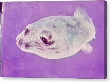 A Makimaki Fish Canvas Print by Horst P. Horst