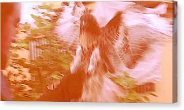 A Man And A Hawk I Canvas Print by Carolina Liechtenstein
