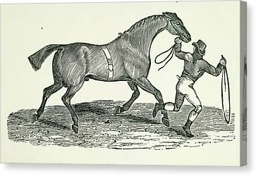 A Man And Horse Canvas Print by British Library