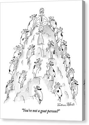 Goat Canvas Print - A Man Sits On Top Of A Mountain With Goats by Victoria Roberts