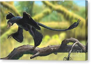 A Microraptor Perched On A Tree Branch Canvas Print by Sergey Krasovskiy