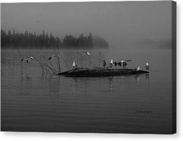 A Misty Greeting  Canvas Print by Steven Clipperton