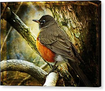 A Moment For Mother Robin Canvas Print