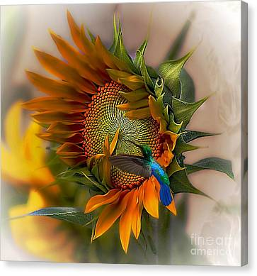 Hummingbird Canvas Print - A Moment In Time by John  Kolenberg