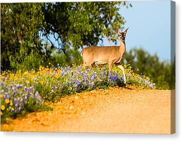 A Moment With A Wildflower Deer Canvas Print by Ellie Teramoto