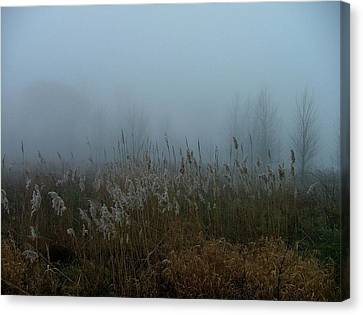 A Morning Fog Canvas Print