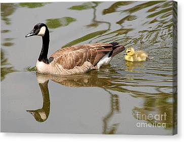 A Mother's Love Canvas Print by Bob and Jan Shriner