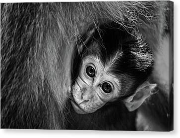 A Mother's Love Canvas Print by Gunarto Song