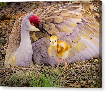 A Mother's Lovely Touch Canvas Print