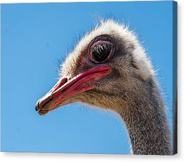 Ostrich Canvas Print - A Mug Only A Mother Could Love. by Jean Noren