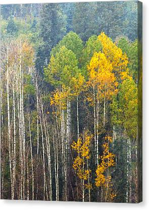 A Muted Fall Canvas Print by Rick Furmanek