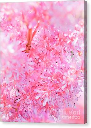 A Natural Pink Bouquet Canvas Print