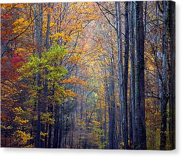 Canvas Print featuring the photograph A Nature Painting by J Cheyenne Howell