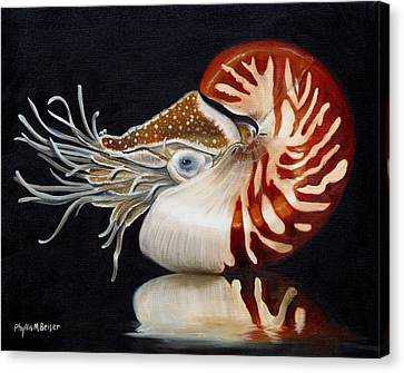 A Nautilus Study Canvas Print