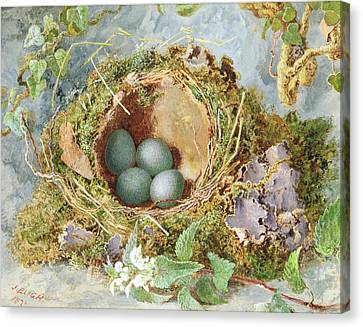 Nature Study Canvas Print - A Nest Of Eggs, 1871 by Jabez Bligh