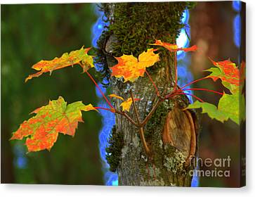 A New Branch Canvas Print