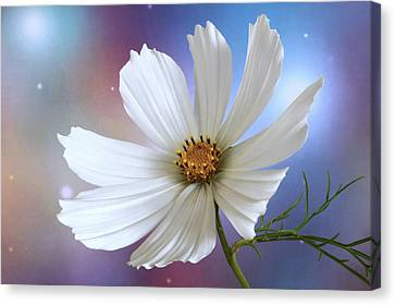 A New Cosmos. Canvas Print by Terence Davis