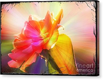 Canvas Print featuring the photograph A New Day by Lori Mellen-Pagliaro